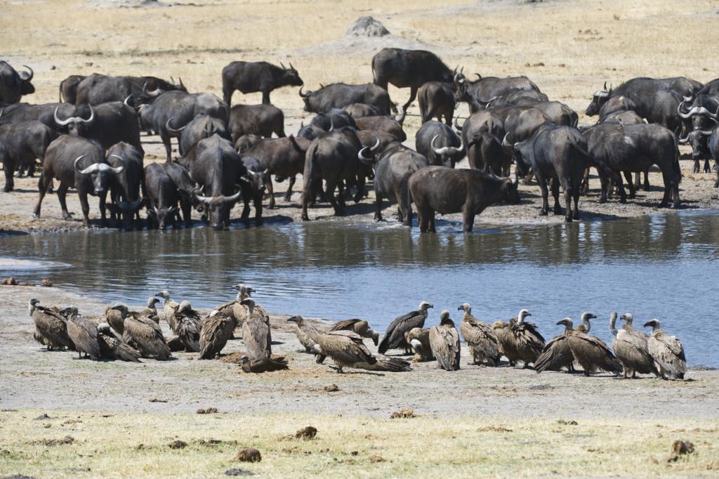 Tasimba, Safari, Linkwasha, Hwange,