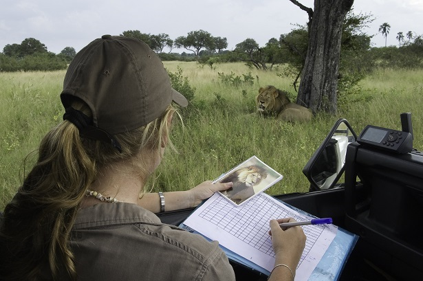 Kate Collins documenting Lion ID in Hwange National Park