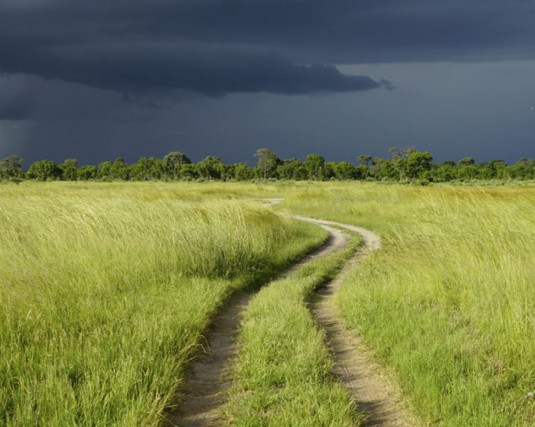 Africa Calls Tasimba dark sky