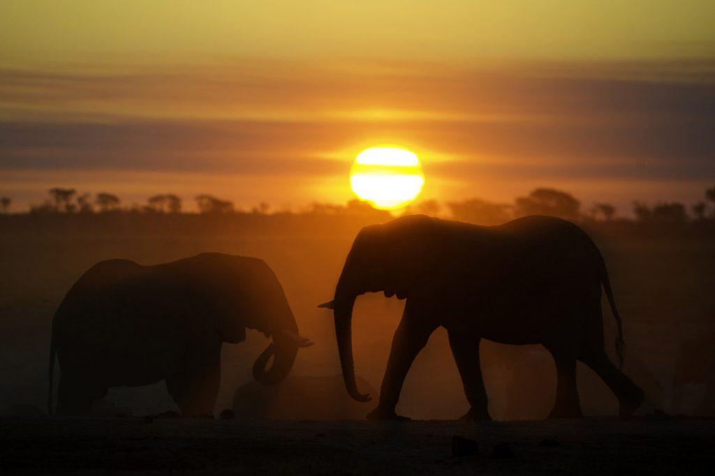 Africa Calls Tasimba Elephants at sunset