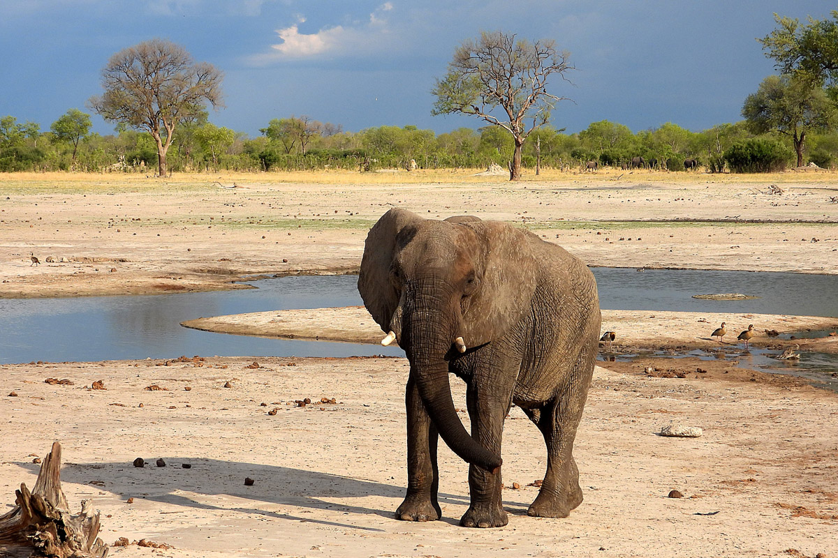 Tasimba November 2019 Safari Linkwasha Elephant