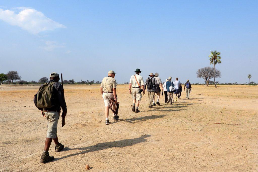 Tasimba Looking Forward Walking Safari