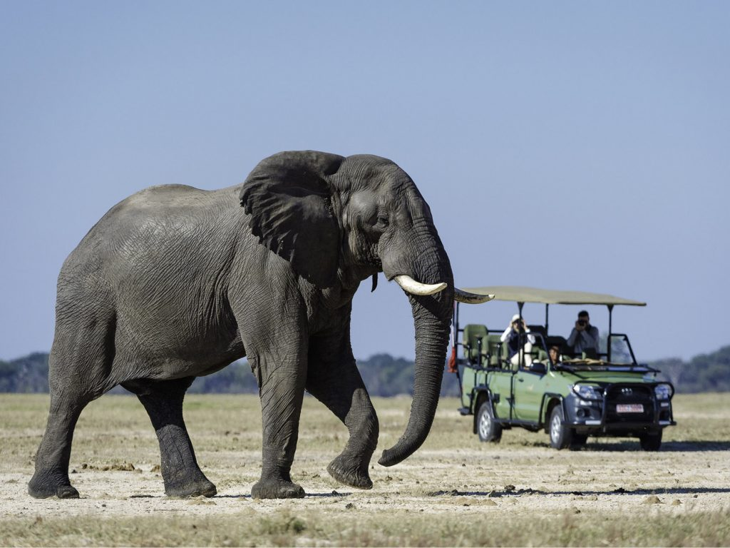 Tasimba We Need a Break - Elephant
