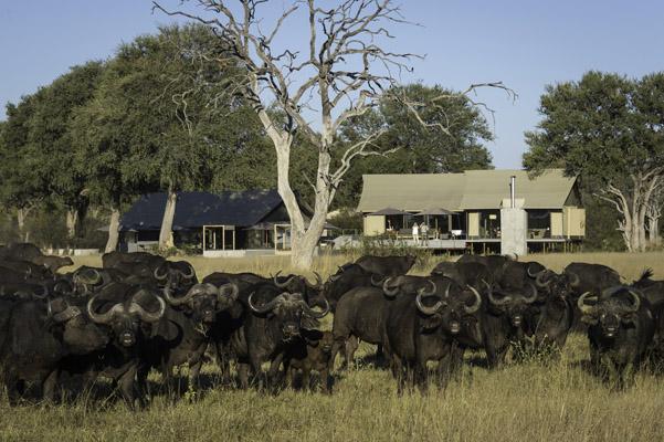 Tasimba - Linkwasha camp - I can't wait...