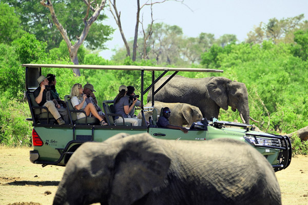 Tasimba - on safari - I can't wait...
